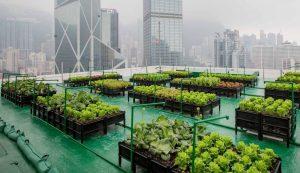 Miestų ūkininkavimas